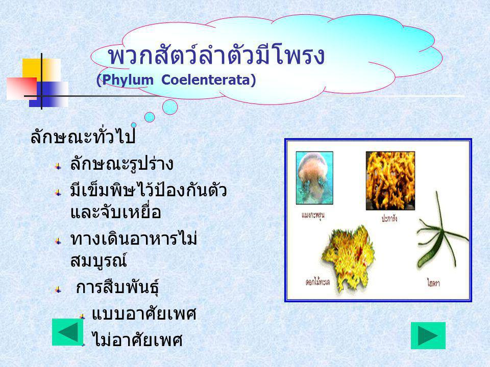 พวกฟองน้ำ (Phylum Porifera) ลักษณะทั่วไป ลำตัวเป็นโพรง มีรู พรุนทั่วตัว มีหนามหรือเส้นใย เป็น โครงค้ำจุนร่างกาย ไม่มีระบบประสาท การสืบพันธุ์ แบบอาศัยเ
