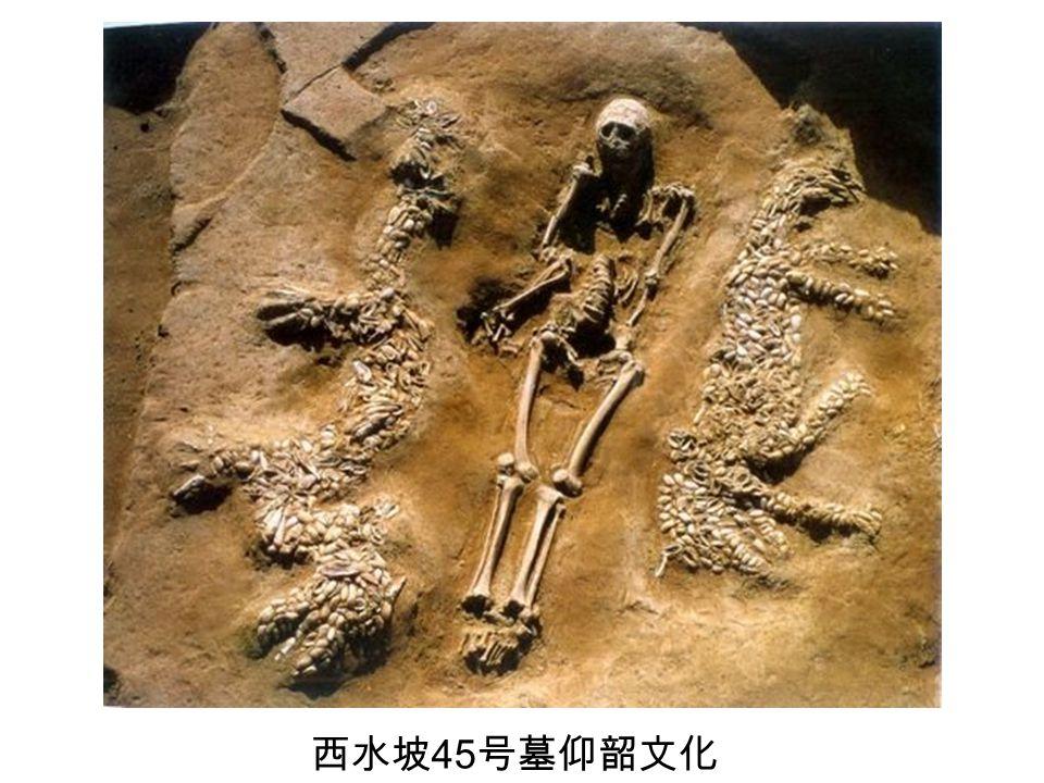 西水坡 45 号墓仰韶文化