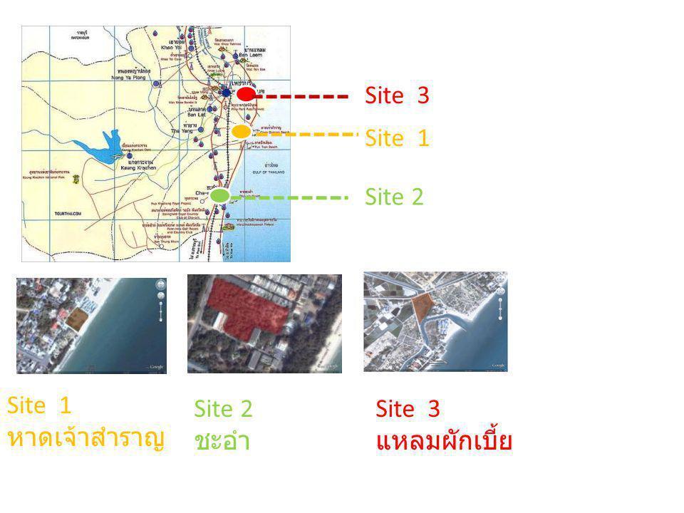 Site 3 Site 1 Site 2 Site 1 หาดเจ้าสำราญ Site 3 แหลมผักเบี้ย Site 2 ชะอำ