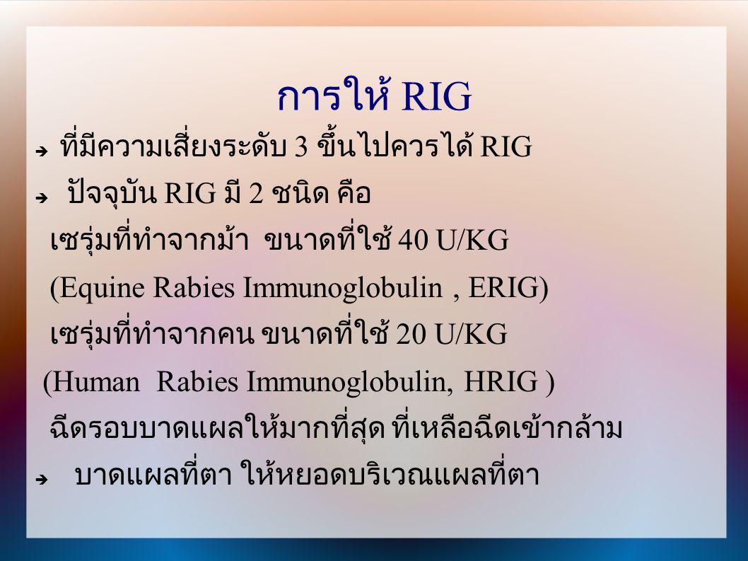 การให้ RIG  ที่มีความเสี่ยงระดับ 3 ขึ้นไปควรได้ RIG  ปัจจุบัน RIG มี 2 ชนิด คือ เซรุ่มที่ทำจากม้า ขนาดที่ใช้ 40 U/KG (Equine Rabies Immunoglobulin,