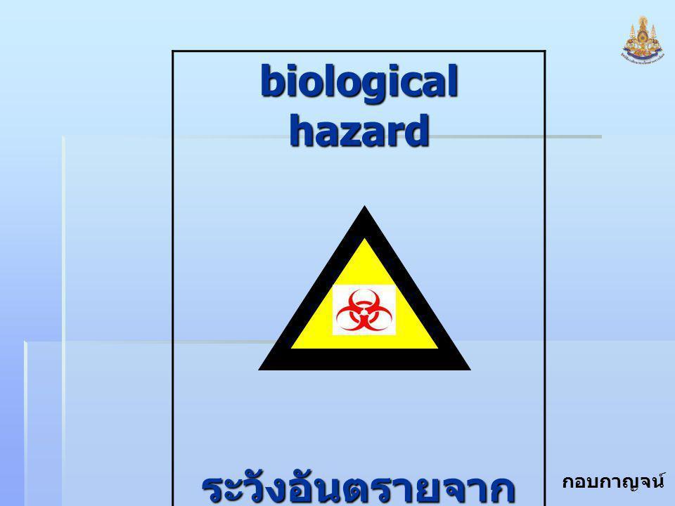 กอบกาญจน์ สุทธิสม biological hazard ระวังอันตรายจาก เชื้อโรค