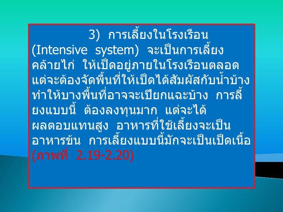 3) การเลี้ยงในโรงเรือน (Intensive system) จะเป็นการเลี้ยง คล้ายไก่ ให้เป็ดอยู่ภายในโรงเรือนตลอด แต่จะต้องจัดพื้นที่ให้เป็ดได้สัมผัสกับน้ำบ้าง ทำให้บาง