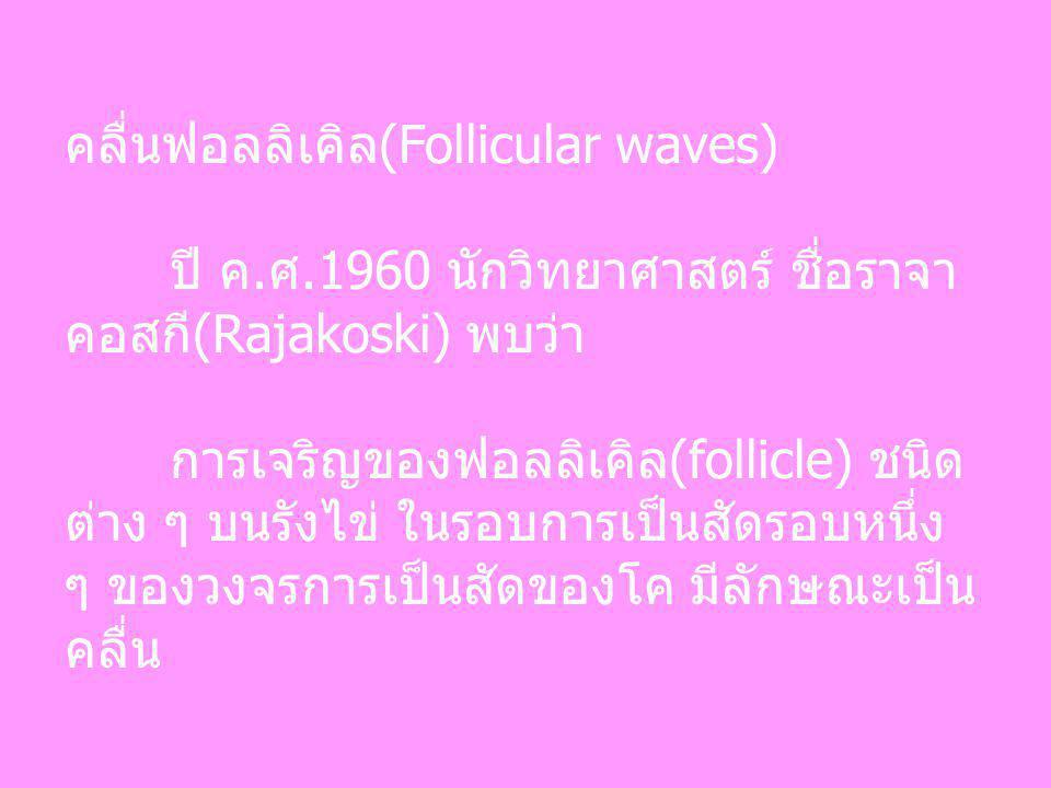 คลื่นฟอลลิเคิล(Follicular waves) ปี ค.ศ.1960 นักวิทยาศาสตร์ ชื่อราจา คอสกี(Rajakoski) พบว่า การเจริญของฟอลลิเคิล(follicle) ชนิด ต่าง ๆ บนรังไข่ ในรอบก