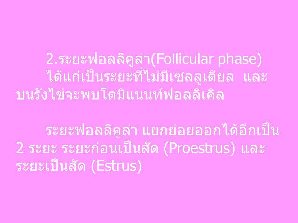 2.ระยะฟอลลิคูล่า(Follicular phase) ได้แก่เป็นระยะที่ไม่มีเซลลูเตียล และ บนรังไข่จะพบโดมิแนนท์ฟอลลิเคิล ระยะฟอลลิคูล่า แยกย่อยออกได้อีกเป็น 2 ระยะ ระยะ