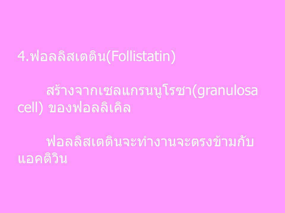 4.ฟอลลิสเตติน(Follistatin) สร้างจากเซลแกรนนูโรซา(granulosa cell) ของฟอลลิเคิล ฟอลลิสเตตินจะทำงานจะตรงข้ามกับ แอคติวิน