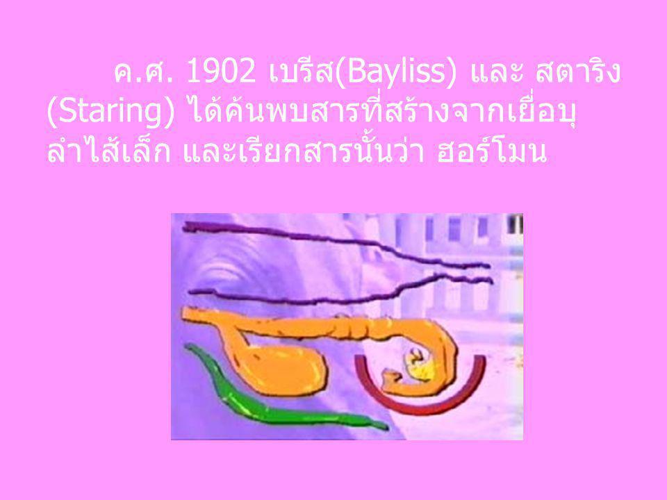 ค.ศ. 1902 เบรีส(Bayliss) และ สตาริง (Staring) ได้ค้นพบสารที่สร้างจากเยื่อบุ ลำไส้เล็ก และเรียกสารนั้นว่า ฮอร์โมน