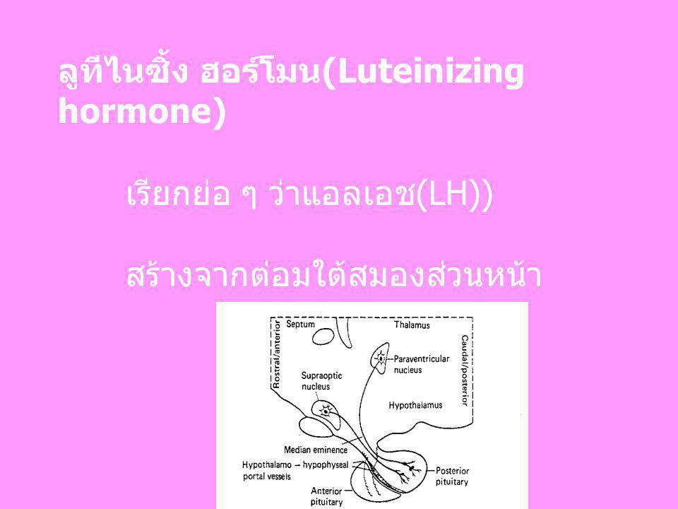 ลูทีไนซิ้ง ฮอร์โมน(Luteinizing hormone) เรียกย่อ ๆ ว่าแอลเอช(LH)) สร้างจากต่อมใต้สมองส่วนหน้า
