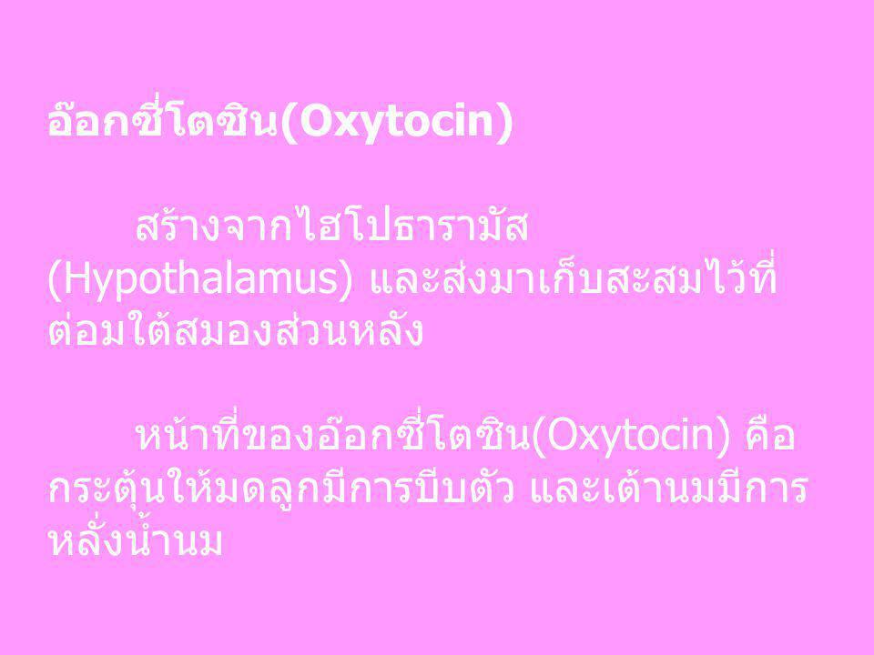 อ๊อกซี่โตซิน(Oxytocin) สร้างจากไฮโปธารามัส (Hypothalamus) และส่งมาเก็บสะสมไว้ที่ ต่อมใต้สมองส่วนหลัง หน้าที่ของอ๊อกซี่โตซิน(Oxytocin) คือ กระตุ้นให้มด