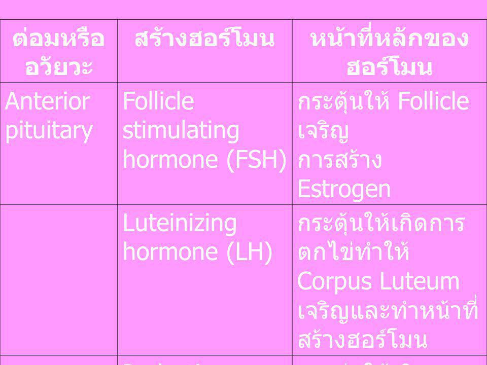 ต่อมหรือ อวัยวะ สร้างฮอร์โมนหน้าที่หลักของ ฮอร์โมน Anterior pituitary Follicle stimulating hormone (FSH) กระตุ้นให้ Follicle เจริญ การสร้าง Estrogen L
