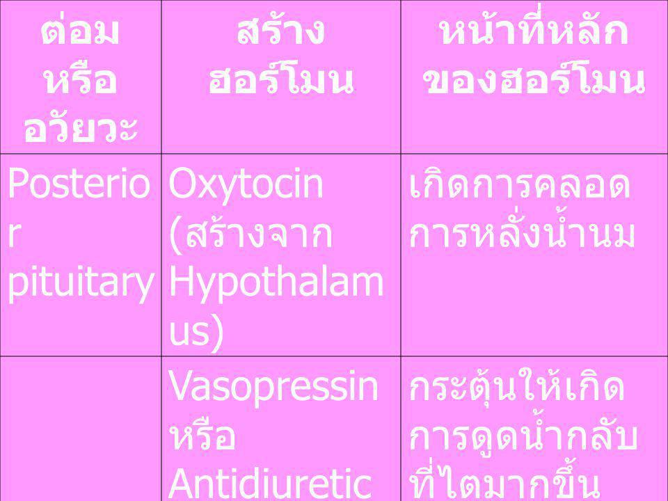 ต่อม หรือ อวัยวะ สร้าง ฮอร์โมน หน้าที่หลัก ของฮอร์โมน Posterio r pituitary Oxytocin ( สร้างจาก Hypothalam us) เกิดการคลอด การหลั่งน้ำนม Vasopressin หร