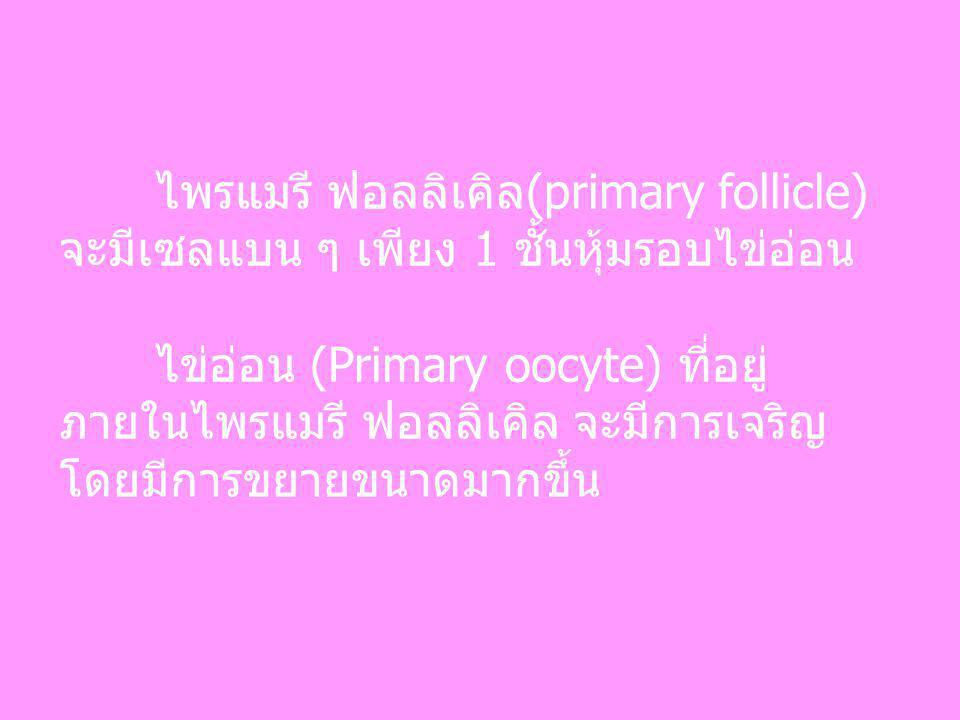 ไพรแมรี ฟอลลิเคิล(primary follicle) จะมีเซลแบน ๆ เพียง 1 ชั้นหุ้มรอบไข่อ่อน ไข่อ่อน (Primary oocyte) ที่อยู่ ภายในไพรแมรี ฟอลลิเคิล จะมีการเจริญ โดยมี
