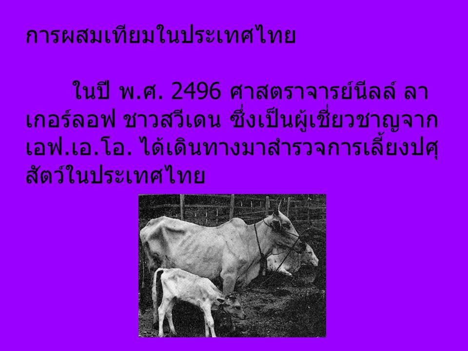 การผสมเทียมในประเทศไทย ในปี พ.ศ. 2496 ศาสตราจารย์นีลล์ ลา เกอร์ลอฟ ชาวสวีเดน ซึ่งเป็นผู้เชี่ยวชาญจาก เอฟ.เอ.โอ. ได้เดินทางมาสำรวจการเลี้ยงปศุ สัตว์ในป