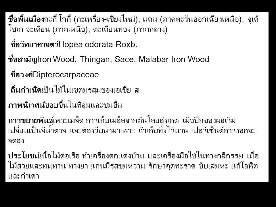 ชื่อพื้นเมืองกะกี้ โกกี้ (กะเหรี่ยง-เชียงใหม่), แคน (ภาคตะวันออกเฉียงเหนือ), จูเค้ โซเก จะเคียน (ภาคเหนือ), ตะเคียนทอง (ภาคกลาง) ชื่อวิทยาศาสตร์Hopea odorata Roxb.