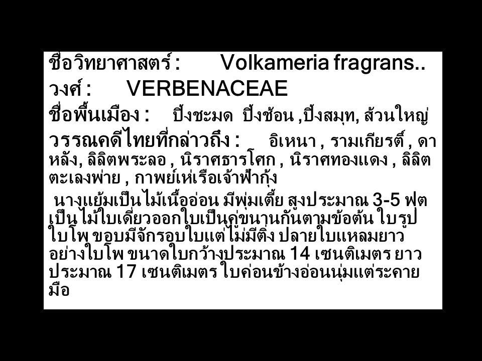 ชื่อวิทยาศาสตร์ : Volkameria fragrans.. วงศ์ : VERBENACEAE ชื่อพื้นเมือง : ปิ้งชะมด ปิ้งช้อน,ปิ้งสมุท, ส้วนใหญ่ วรรณคดีไทยที่กล่าวถึง : อิเหนา, รามเกี
