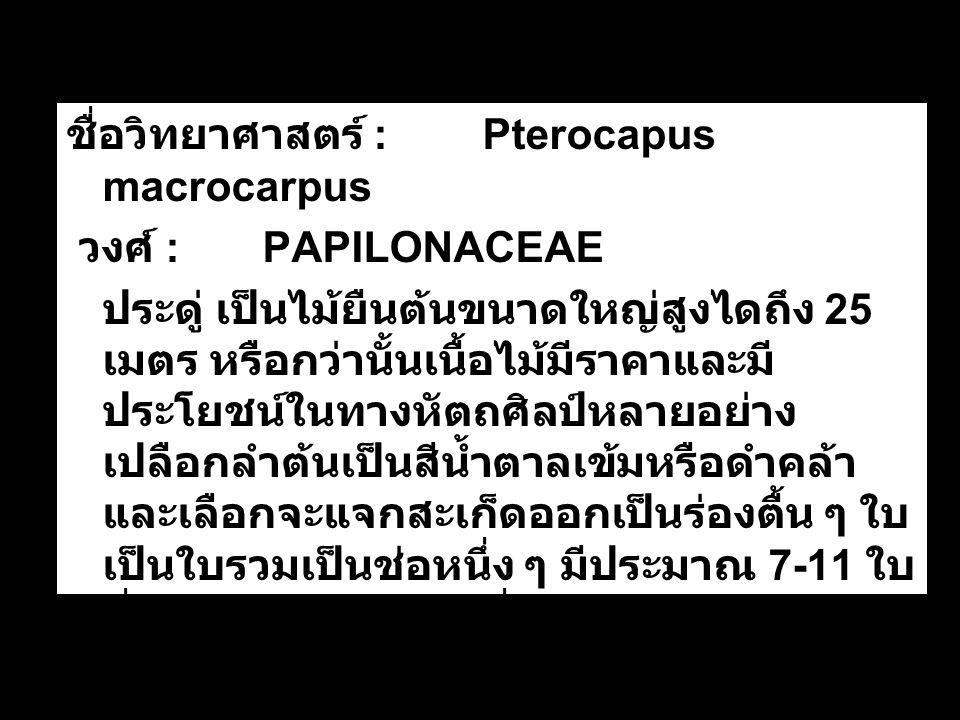 ชื่อวิทยาศาสตร์ : Pterocapus macrocarpus วงศ์ : PAPILONACEAE ประดู่ เป็นไม้ยืนต้นขนาดใหญ่สูงไดถึง 25 เมตร หรือกว่านั้นเนื้อไม้มีราคาและมี ประโยชน์ในทางหัตถศิลป์หลายอย่าง เปลือกลำต้นเป็นสีน้ำตาลเข้มหรือดำคล้า และเลือกจะแจกสะเก็ดออกเป็นร่องตื้น ๆ ใบ เป็นใบรวมเป็นช่อหนึ่ง ๆ มีประมาณ 7-11 ใบ ที่ออกปลายช่อออกเดี่ยวไม่จับคู่ และมี ขนาดใหญ่กว่าใบคู่อื่น ๆ ในช่อเดียวกัน รูป ใบมนรี ปลายใบแหลม ขอบใบเรียบ ขนาด ใบยาวประมาณ 3-5 เซนติเมตร