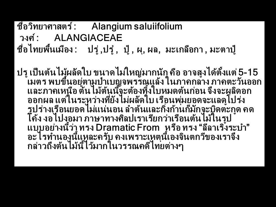 ชื่อวิทยาศาสตร์ : Alangium saluiifolium วงศ์ : ALANGIACEAE ชื่อไทยพื้นเมือง : ปรู่,ปรู๋, ปู๋, ผุ, ผล, มะเกลือกา, มะตาปู๋ ปรู เป็นต้นไม้ผลัดใบ ขนาดไม่ใหญ่มากนัก คือ อาจสูงได้ตั้งแต่ 5-15 เมตร พบขึ้นอยู่ตามป่าเบญจพรรณแล้ง ในภาคกลาง ภาคตะวันออก และภาคเหนือ ต้นไม้ต้นนี้จะต้องทิ้งใบหมดต้นก่อน จึงจะผลิดอก ออกผล แต่ในระหว่างที่ยังไม่ผลัดใบ เรือนพุ่มยอดจะแลดูโปร่ง รูปร่างเรือนยอดไม่แน่นอน ลำต้นและกิ่งก้านก็มักจะบิดตะกูด คด โค้ง งอไปงอมา ภาษาทางศิลปเราเรียกว่าเรือนต้นไม้ในรูป แบบอย่างนี้ว่า ทรง Dramatic From หรือ ทรง ลีลาเริงระบำ อะไรทำนองนี้แหละครับ คงเพราะเหตุนี้เองจินตกวีของเราจึง กล่าวถึงต้นไม้นี้ไว้มากในวรรณคดีไทยต่างๆ