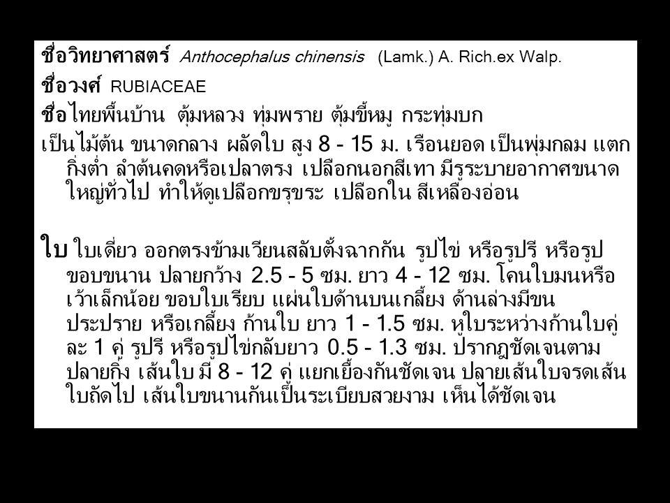 ชื่อวิทยาศาสตร์ Anthocephalus chinensis (Lamk.) A. Rich.ex Walp. ชื่อวงศ์ RUBIACEAE ชื่อไทยพื้นบ้าน ตุ้มหลวง ทุ่มพราย ตุ้มขี้หมู กระทุ่มบก เป็นไม้ต้น