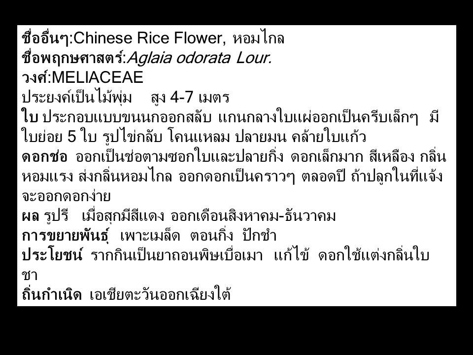 ชื่ออื่นๆ:Chinese Rice Flower, หอมไกล ชื่อพฤกษศาสตร์:Aglaia odorata Lour. วงศ์:MELIACEAE ประยงค์เป็นไม้พุ่ม สูง 4-7 เมตร ใบ ประกอบแบบขนนกออกสลับ แกนกล