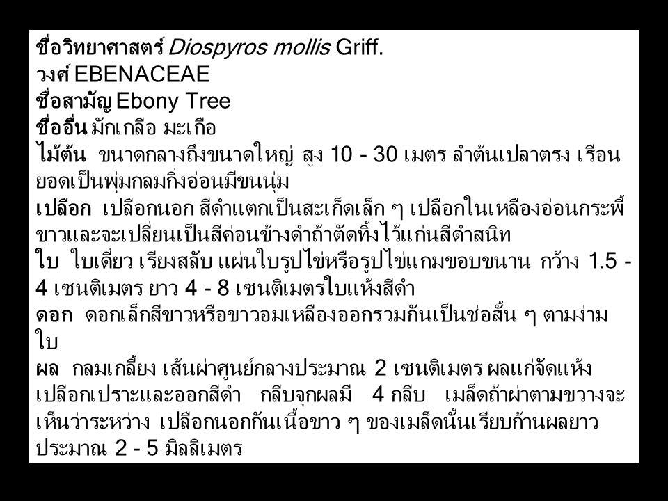 ชื่อวิทยาศาสตร์ Diospyros mollis Griff. วงศ์ EBENACEAE ชื่อสามัญ Ebony Tree ชื่ออื่น มักเกลือ มะเกือ ไม้ต้น ขนาดกลางถึงขนาดใหญ่ สูง 10 - 30 เมตร ลำต้น