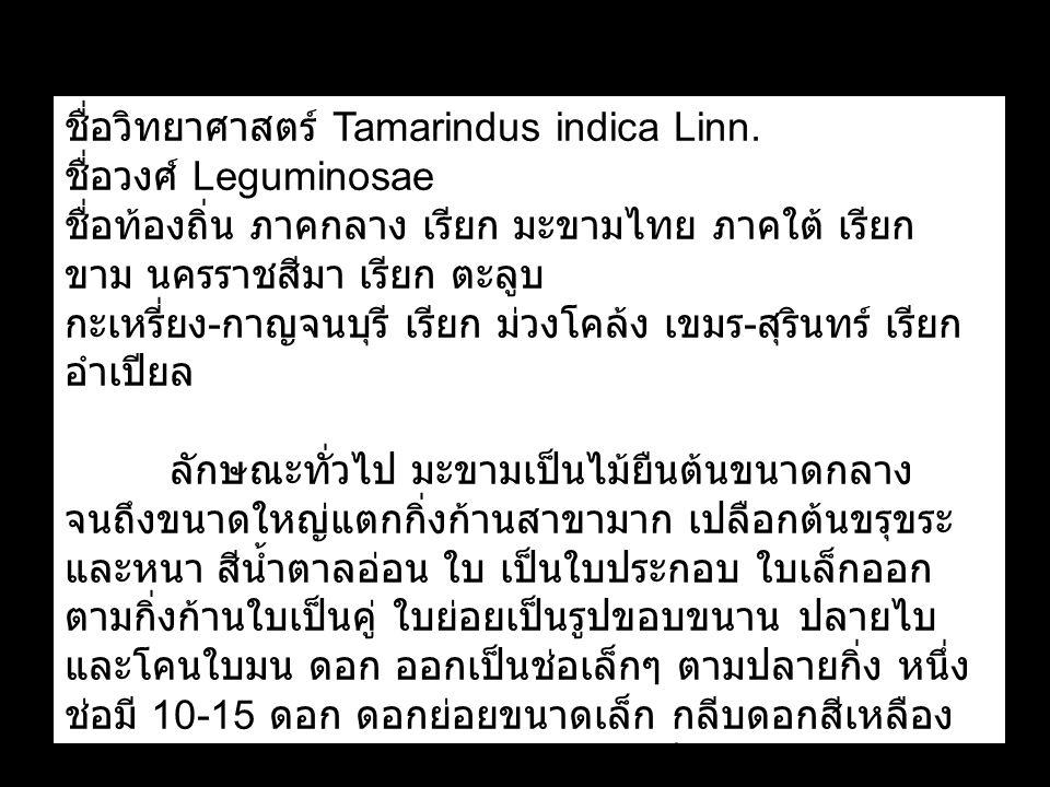 ชื่อวิทยาศาสตร์ Tamarindus indica Linn. ชื่อวงศ์ Leguminosae ชื่อท้องถิ่น ภาคกลาง เรียก มะขามไทย ภาคใต้ เรียก ขาม นครราชสีมา เรียก ตะลูบ กะเหรี่ยง - ก