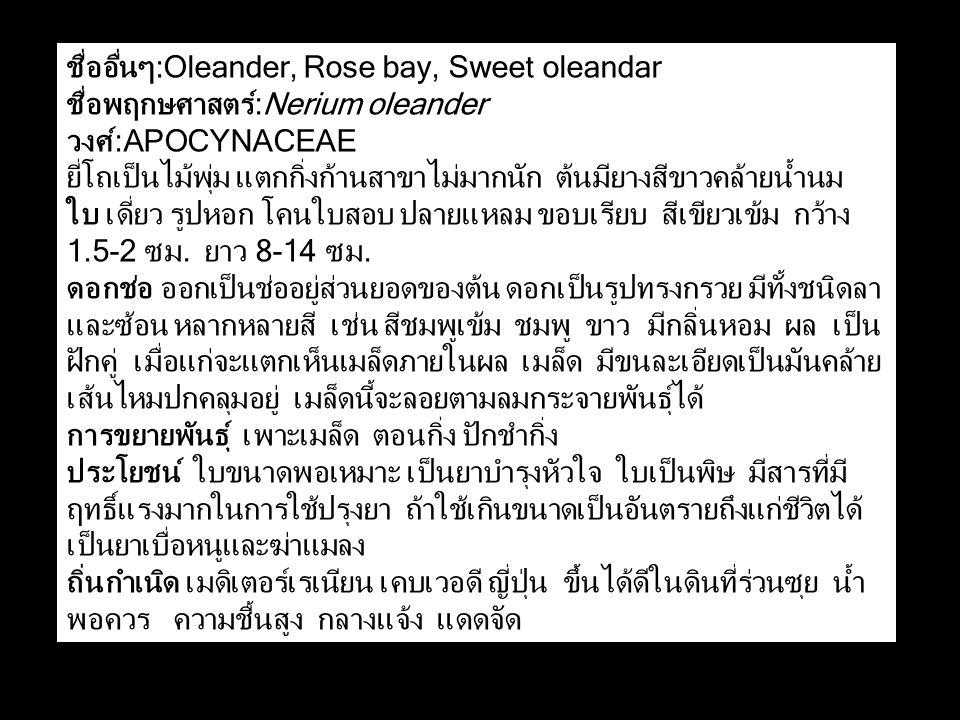 ชื่ออื่นๆ:Oleander, Rose bay, Sweet oleandar ชื่อพฤกษศาสตร์:Nerium oleander วงศ์:APOCYNACEAE ยี่โถเป็นไม้พุ่ม แตกกิ่งก้านสาขาไม่มากนัก ต้นมียางสีขาวคล้ายน้ำนม ใบ เดี่ยว รูปหอก โคนใบสอบ ปลายแหลม ขอบเรียบ สีเขียวเข้ม กว้าง 1.5-2 ซม.