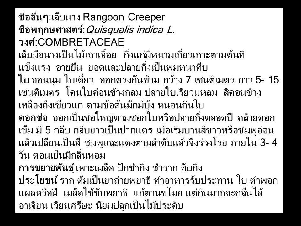 ชื่ออื่นๆ:เล็บนาง Rangoon Creeper ชื่อพฤกษศาสตร์:Quisqualis indica L. วงศ์:COMBRETACEAE เล็บมือนางเป็นไม้เถาเลื้อย กิ่งแก่มีหนามเกี่ยวเกาะตามต้นที่ แข