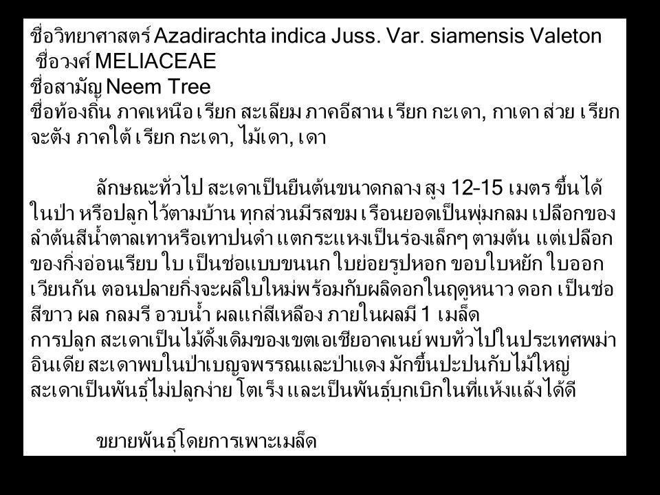 ชื่อวิทยาศาสตร์ Azadirachta indica Juss. Var. siamensis Valeton ชื่อวงศ์ MELIACEAE ชื่อสามัญ Neem Tree ชื่อท้องถิ่น ภาคเหนือ เรียก สะเลียม ภาคอีสาน เร