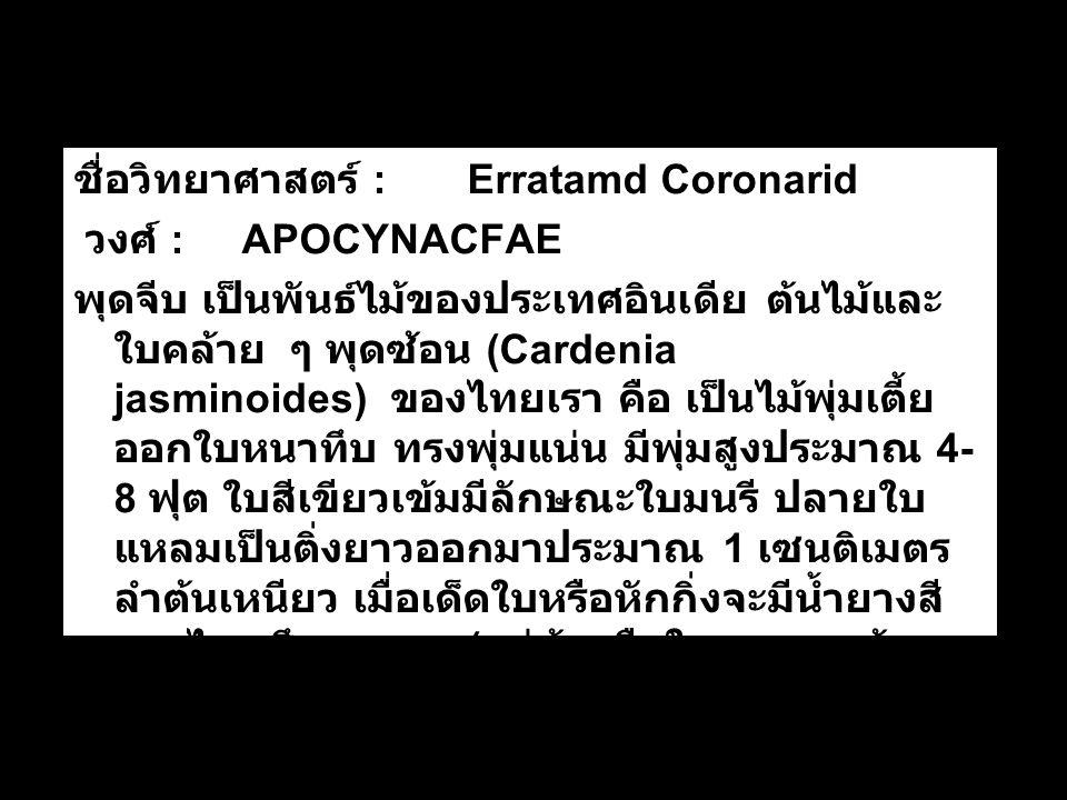 ชื่อวิทยาศาสตร์ : Erratamd Coronarid วงศ์ : APOCYNACFAE พุดจีบ เป็นพันธ์ไม้ของประเทศอินเดีย ต้นไม้และ ใบคล้าย ๆ พุดซ้อน (Cardenia jasminoides) ของไทยเรา คือ เป็นไม้พุ่มเตี้ย ออกใบหนาทึบ ทรงพุ่มแน่น มีพุ่มสูงประมาณ 4- 8 ฟุต ใบสีเขียวเข้มมีลักษณะใบมนรี ปลายใบ แหลมเป็นติ่งยาวออกมาประมาณ 1 เซนติเมตร ลำต้นเหนียว เมื่อเด็ดใบหรือหักกิ่งจะมีน้ำยางสี ขาวไหลซึมออกมา ( แต่ต้นหรือใบของพุดซ้อน จะไม่มียางที่ว่านี้ เพราะเป็นไม้ต่างวงศ์ )