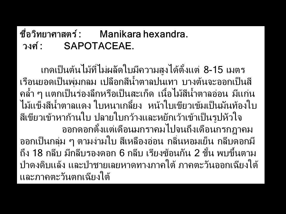 ชื่อวิทยาศาสตร์ : Manikara hexandra.วงศ์ : SAPOTACEAE.