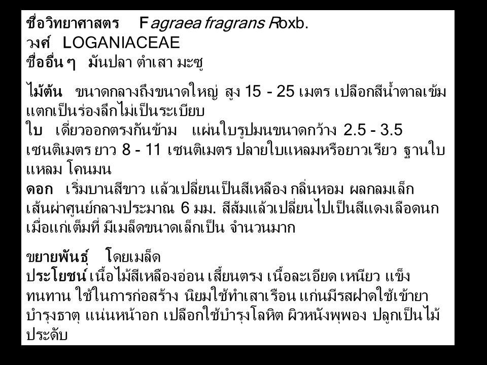 ชื่อวิทยาศาสตร Fagraea fragrans Roxb.