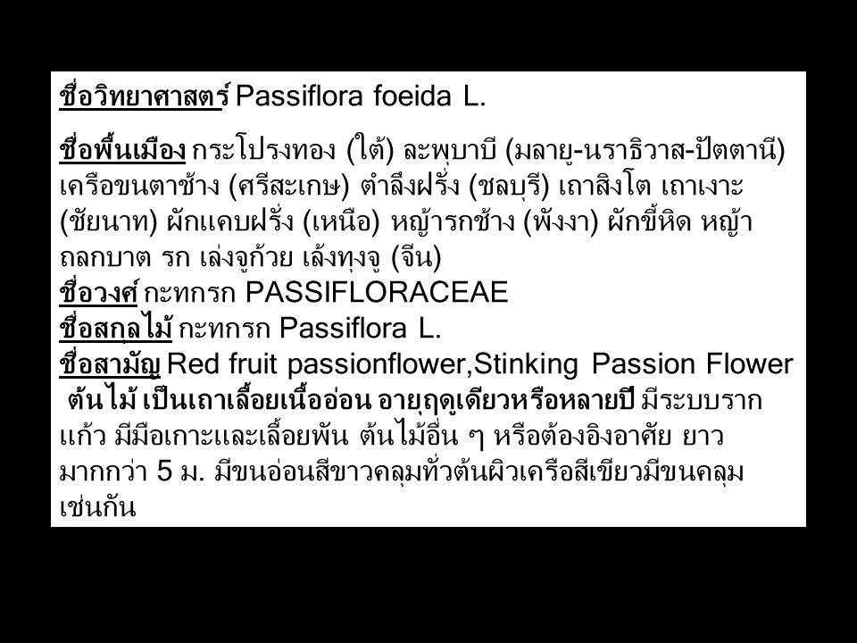 ชื่อวิทยาศาสตร์ Passiflora foeida L. ชื่อพื้นเมือง กระโปรงทอง (ใต้) ละพุบาบี (มลายู-นราธิวาส-ปัตตานี) เครือขนตาช้าง (ศรีสะเกษ) ตำลึงฝรั่ง (ชลบุรี) เถา