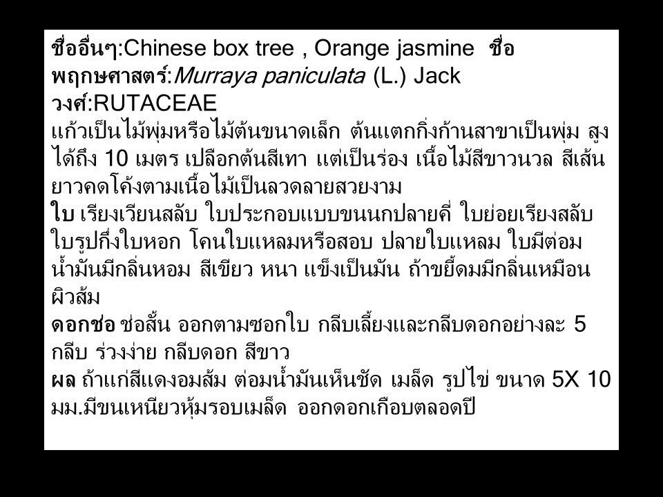 ชื่ออื่นๆ:Chinese box tree, Orange jasmine ชื่อ พฤกษศาสตร์:Murraya paniculata (L.) Jack วงศ์:RUTACEAE แก้วเป็นไม้พุ่มหรือไม้ต้นขนาดเล็ก ต้นแตกกิ่งก้านสาขาเป็นพุ่ม สูง ได้ถึง 10 เมตร เปลือกต้นสีเทา แต่เป็นร่อง เนื้อไม้สีขาวนวล สีเส้น ยาวคดโค้งตามเนื้อไม้เป็นลวดลายสวยงาม ใบ เรียงเวียนสลับ ใบประกอบแบบขนนกปลายคี่ ใบย่อยเรียงสลับ ใบรูปกึ่งใบหอก โคนใบแหลมหรือสอบ ปลายใบแหลม ใบมีต่อม น้ำมันมีกลิ่นหอม สีเขียว หนา แข็งเป็นมัน ถ้าขยี้ดมมีกลิ่นเหมือน ผิวส้ม ดอกช่อ ช่อสั้น ออกตามซอกใบ กลีบเลี้ยงและกลีบดอกอย่างละ 5 กลีบ ร่วงง่าย กลีบดอก สีขาว ผล ถ้าแก่สีแดงอมส้ม ต่อมน้ำมันเห็นชัด เมล็ด รูปไข่ ขนาด 5X 10 มม.มีขนเหนียวหุ้มรอบเมล็ด ออกดอกเกือบตลอดปี