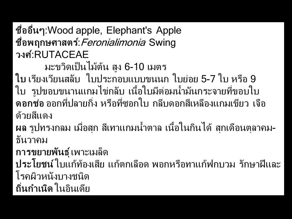 ชื่ออื่นๆ:Wood apple, Elephant's Apple ชื่อพฤกษศาสตร์:Feronialimonia Swing วงศ์:RUTACEAE มะขวิดเป็นไม้ต้น สูง 6-10 เมตร ใบ เรียงเวียนสลับ ใบประกอบแบบข