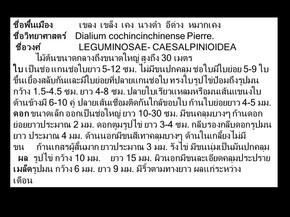 ชื่อพื้นเมือง เขลง เขล็ง เคง นางดำ อีด่าง หมากเคง ชื่อวิทยาศาสตร์ Dialium cochincinchinense Pierre. ชื่อวงศ์ LEGUMINOSAE- CAESALPINIOIDEA ไม้ต้นขนาดกล