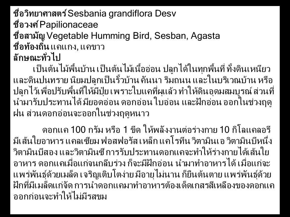 ชื่อวิทยาศาสตร์ Sesbania grandiflora Desv ชื่อวงศ์ Papilionaceae ชื่อสามัญ Vegetable Humming Bird, Sesban, Agasta ชื่อท้องถิ่น แคแกง, แคขาว ลักษณะทั่ว