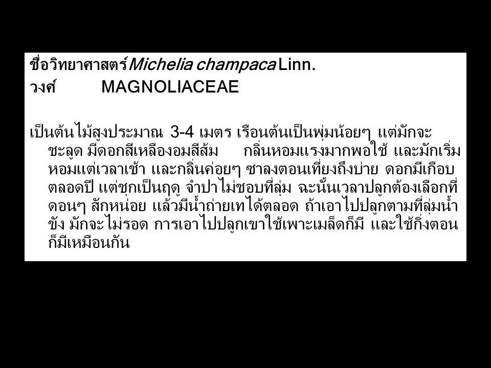 ชื่อวิทยาศาสตร์Michelia champaca Linn.