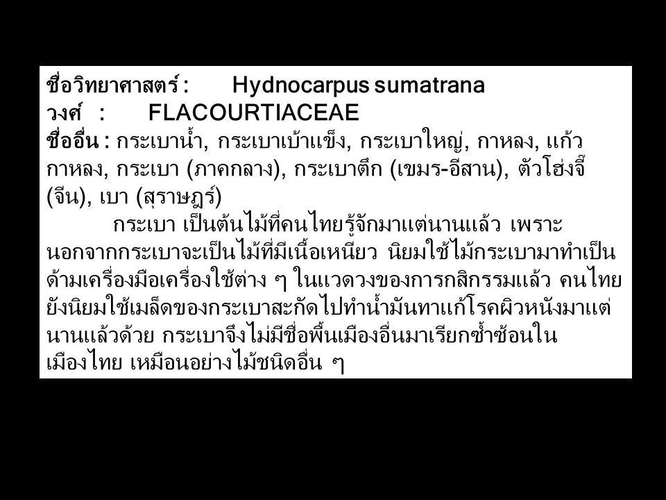 ชื่อวิทยาศาสตร์ : Hydnocarpus sumatrana วงศ์ : FLACOURTIACEAE ชื่ออื่น : กระเบาน้ำ, กระเบาเบ้าแข็ง, กระเบาใหญ่, กาหลง, แก้ว กาหลง, กระเบา (ภาคกลาง), กระเบาตึก (เขมร-อีสาน), ตัวโฮ่งจี๊ (จีน), เบา (สุราษฎร์) กระเบา เป็นต้นไม้ที่คนไทยรู้จักมาแต่นานแล้ว เพราะ นอกจากกระเบาจะเป็นไม้ที่มีเนื้อเหนียว นิยมใช้ไม้กระเบามาทำเป็น ด้ามเครื่องมือเครื่องใช้ต่าง ๆ ในแวดวงของการกสิกรรมแล้ว คนไทย ยังนิยมใช้เมล็ดของกระเบาสะกัดไปทำน้ำมันทาแก้โรคผิวหนังมาแต่ นานแล้วด้วย กระเบาจึงไม่มีชื่อพื้นเมืองอื่นมาเรียกซ้ำซ้อนใน เมืองไทย เหมือนอย่างไม้ชนิดอื่น ๆ