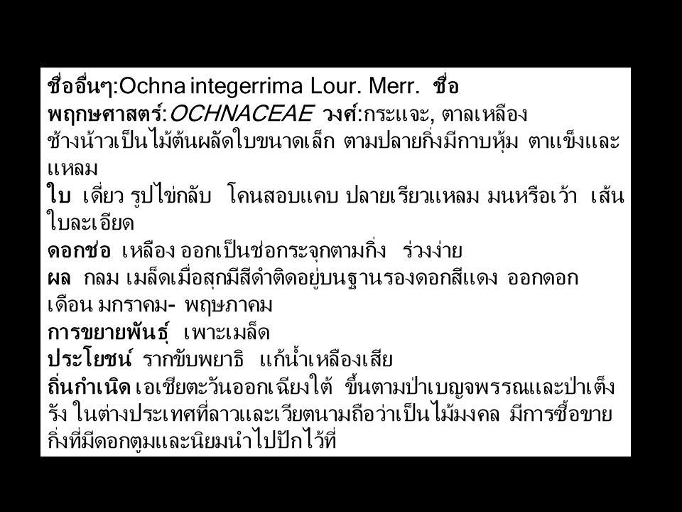 ชื่ออื่นๆ:Ochna integerrima Lour. Merr. ชื่อ พฤกษศาสตร์:OCHNACEAE วงศ์:กระแจะ, ตาลเหลือง ช้างน้าวเป็นไม้ต้นผลัดใบขนาดเล็ก ตามปลายกิ่งมีกาบหุ้ม ตาแข็งแ