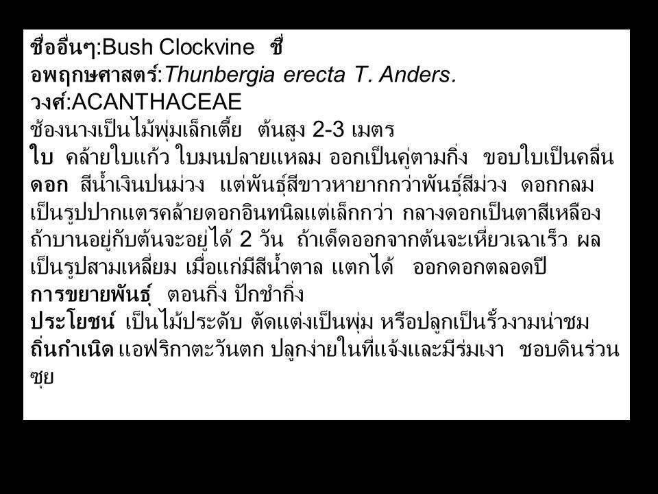 ชื่ออื่นๆ :Bush Clockvine ชื่ อพฤกษศาสตร์ :Thunbergia erecta T. Anders. วงศ์ :ACANTHACEAE ช้องนางเป็นไม้พุ่มเล็กเตี้ย ต้นสูง 2-3 เมตร ใบ คล้ายใบแก้ว ใ