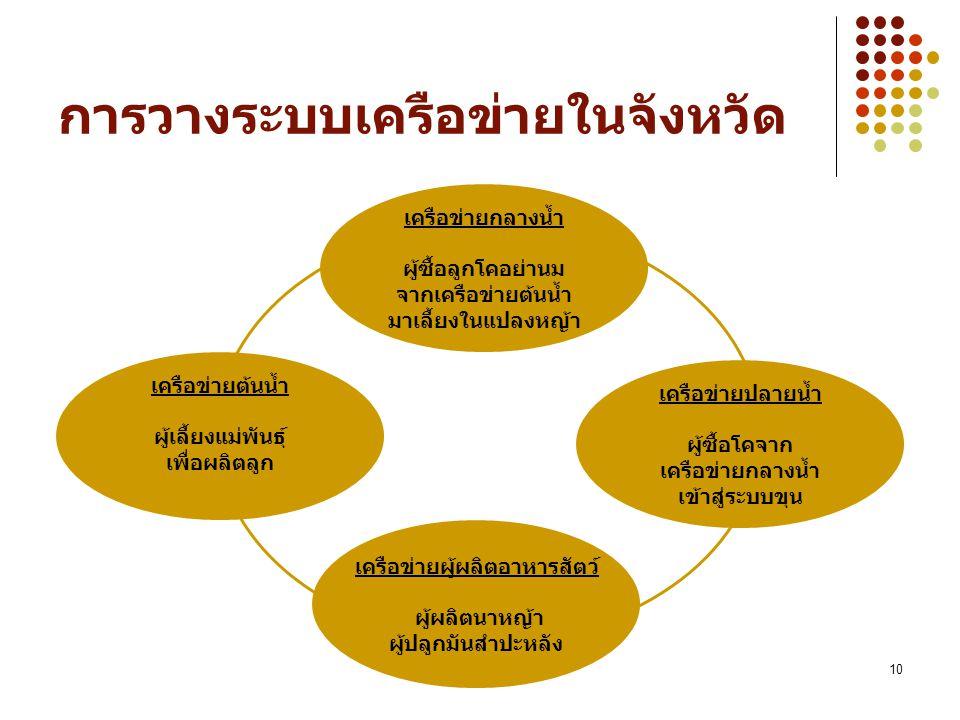 10 การวางระบบเครือข่ายในจังหวัด เครือข่ายต้นน้ำ ผู้เลี้ยงแม่พันธุ์ เพื่อผลิตลูก เครือข่ายปลายน้ำ ผู้ซื้อโคจาก เครือข่ายกลางน้ำ เข้าสู่ระบบขุน เครือข่ายกลางน้ำ ผู้ซื้อลูกโคอย่านม จากเครือข่ายต้นน้ำ มาเลี้ยงในแปลงหญ้า เครือข่ายผู้ผลิตอาหารสัตว์ ผู้ผลิตนาหญ้า ผู้ปลูกมันสำปะหลัง