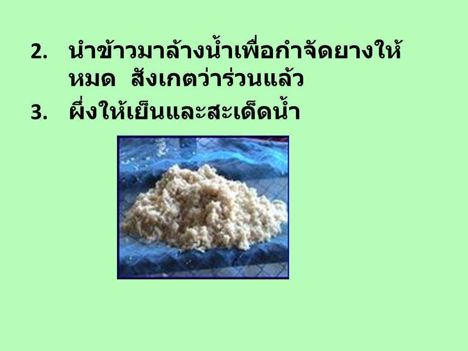 2. นำข้าวมาล้างน้ำเพื่อกำจัดยางให้ หมด สังเกตว่าร่วนแล้ว 3. ผึ่งให้เย็นและสะเด็ดน้ำ