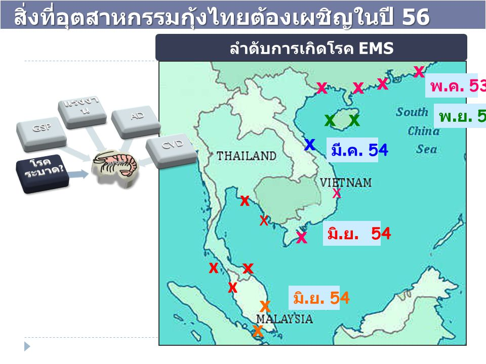 x x xx xx x x x x x x x x x x พ. ย. 53 มี. ค. 54 มิ. ย. 54 พ. ค. 53 ลำดับการเกิดโรค EMS สิ่งที่อุตสาหกรรมกุ้งไทยต้องเผชิญในปี 56