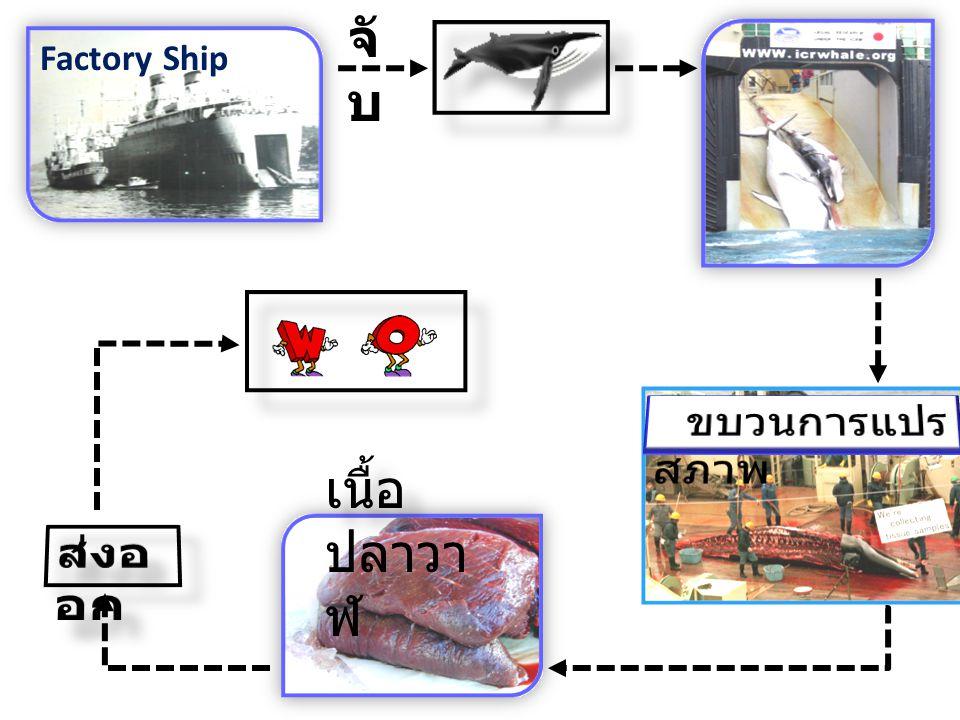 Factory Ship จั บ เนื้อ ปลาวา ฬ