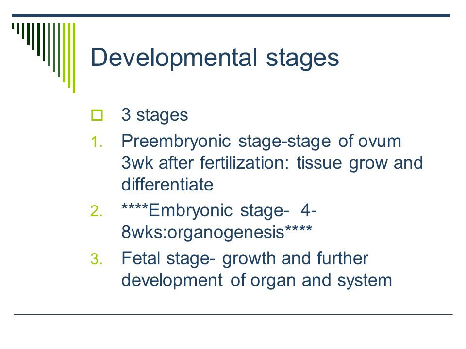 Developmental stages  3 stages 1. Preembryonic stage-stage of ovum 3wk after fertilization: tissue grow and differentiate 2. ****Embryonic stage- 4-