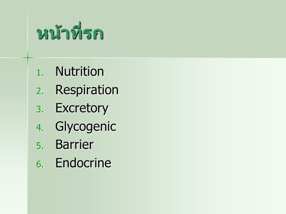 หน้าที่รก 1. Nutrition 2. Respiration 3. Excretory 4. Glycogenic 5. Barrier 6. Endocrine