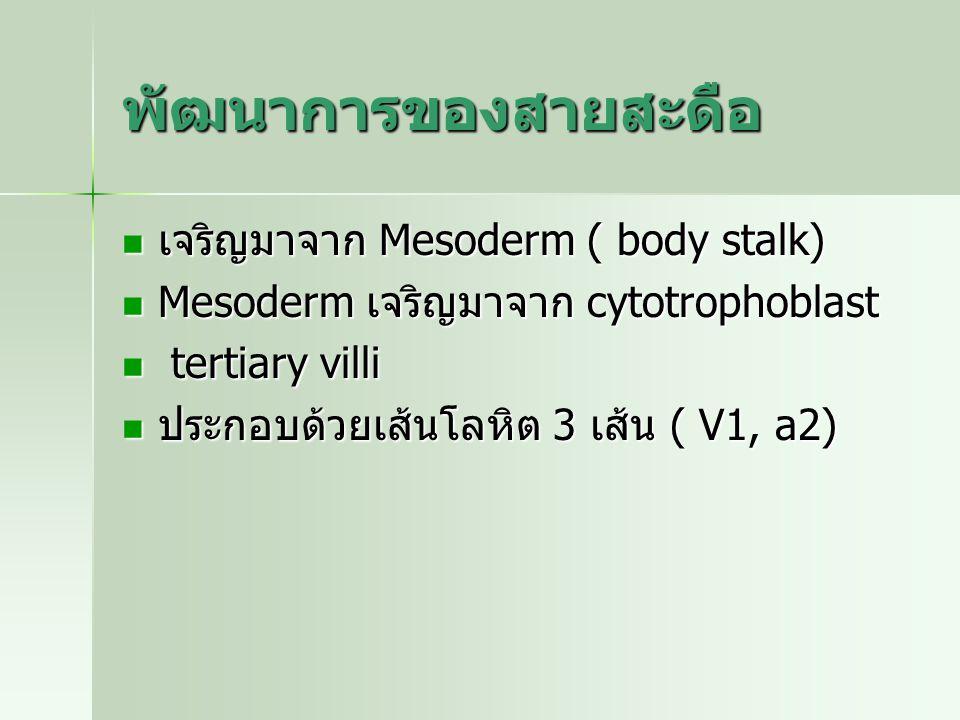 พัฒนาการของสายสะดือ เจริญมาจาก Mesoderm ( body stalk) เจริญมาจาก Mesoderm ( body stalk) Mesoderm เจริญมาจาก cytotrophoblast Mesoderm เจริญมาจาก cytotr