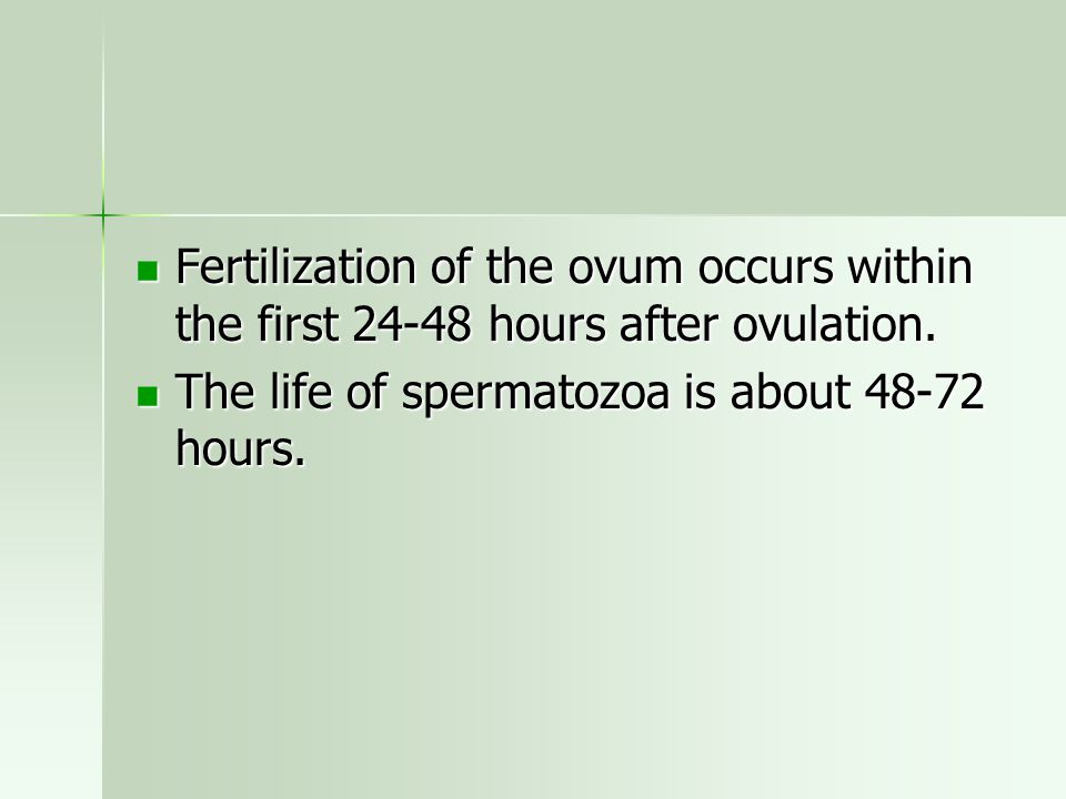 Fertilization of the ovum occurs within the first 24-48 hours after ovulation. Fertilization of the ovum occurs within the first 24-48 hours after ovu