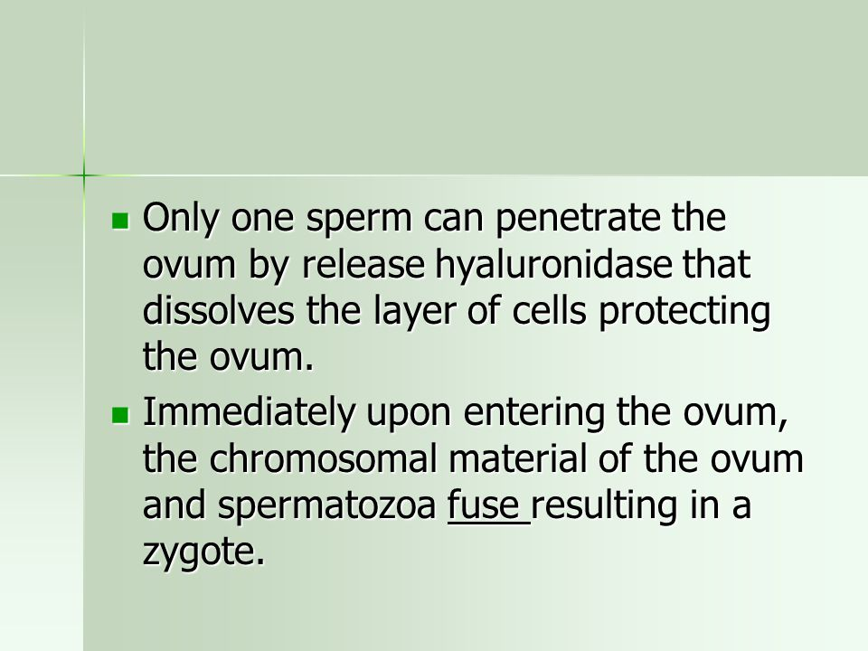 Only one sperm can penetrate the ovum by release hyaluronidase that dissolves the layer of cells protecting the ovum. Only one sperm can penetrate the