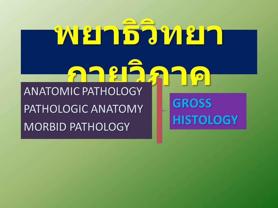พยาธิวิทยา กายวิภาค ANATOMIC PATHOLOGY PATHOLOGIC ANATOMY MORBID PATHOLOGY GROSSHISTOLOGY