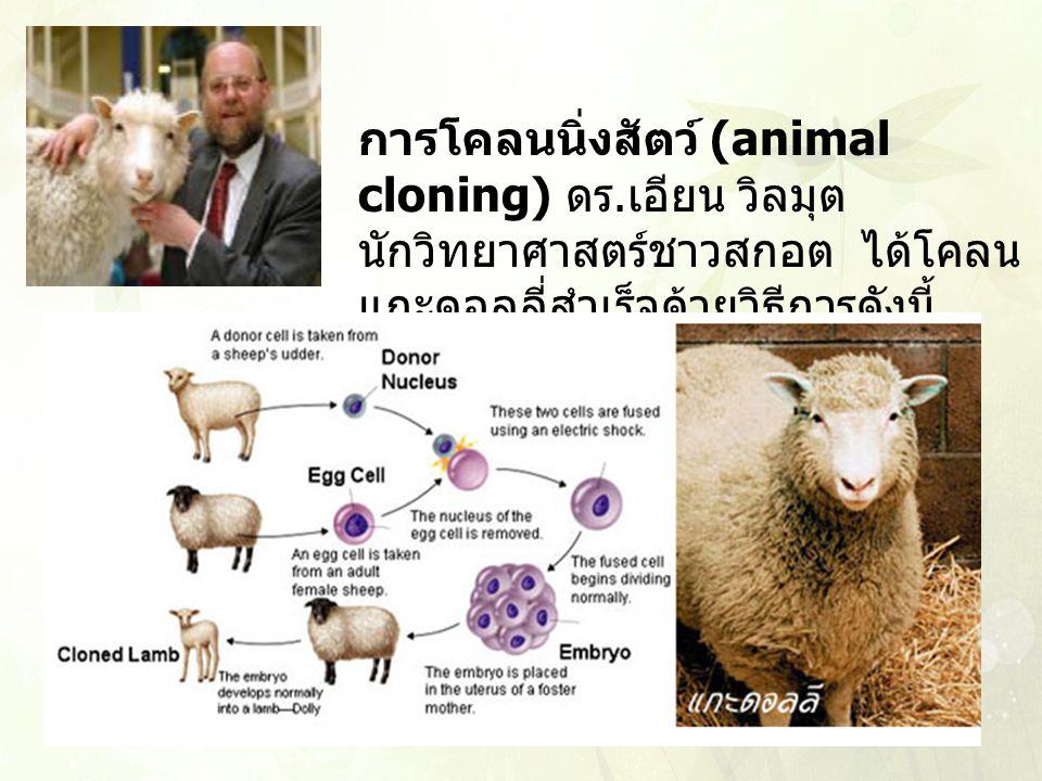 การโคลนนิ่งสัตว์ (animal cloning) ดร. เอียน วิลมุต นักวิทยาศาสตร์ชาวสกอต ได้โคลน แกะดอลลี่สำเร็จด้วยวิธีการดังนี้